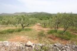 Prodaje se održavano i kultivirano poljoprivredno zemljište u zaleđu Vodica
