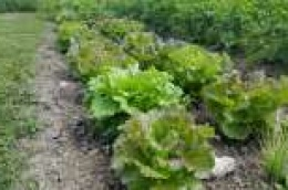 Vlasnici malih poljoprivrednih gospodarstava prijavite se na natječaj LAG-a More 249 i ostvarite potporu od 15 tisuća eura