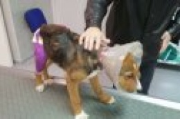 Primjer za uzor: Grad Vodice financijski pomogao u liječenju napuštenog i ozlijeđenog psa