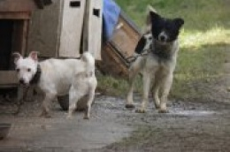 Pokrenuta nacionalna kampanja za Hrvatsku bez pasa na lancu