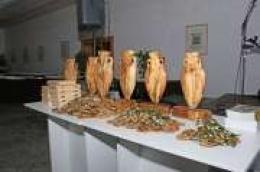 U subotu hotel Olympia domaćin tradicionalne manifestacije Dani mladog maslinovog ulja u Dalmaciji