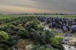 Radi ublažavanja posljedica pandemije COVID-19 poljoprivrednicima na raspolaganju 360 milijuna kuna