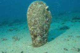 Vodički ronilac upozorava: Žive periske više ne mogu pronaći u našem arhipelagu