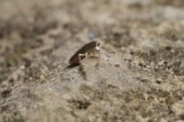 """U Nacionalnom parku """"Krka"""" opisana još jedna nova vrsta: Rasplesani skokun zaplesao na svjetskoj pozornici bioraznolikosti"""