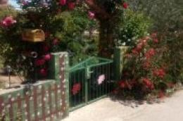 Karantena im nije zaustavila kreativnost: Stanovnici ulice Srima V oslikali ogradne zidove i tako uljepšali svoje okućnice