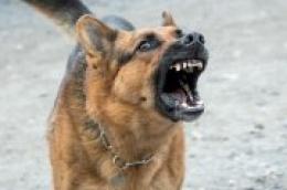 65-godišnjem Vodičaninu oduzelo psa jer ga je nepropisno držao, a on prijetio i zaradio kaznenu prijavu