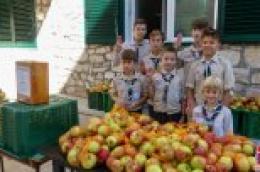 Skauti u Vodicama, Srimi i Tribunju podijelili 1.188 kilograma vrhunskih, biološki uzgojenih jabuka