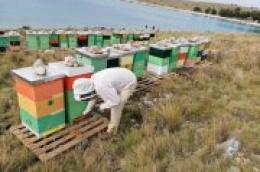 Sve tajne meda s kornatskog krša