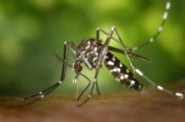 Obavijest o zaprašivanju protiv komaraca