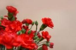 Sretan Dan žena od srca Vam želi SDP Vodice