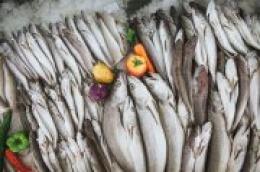 Zaželjeli ste se domaće ribe, a ribarnica ne radi: Ribarska zadruga Adria dostavlja na kućni prag za vas!