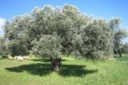 Grad Vodice dodjeljuje 174 tisuća kuna potpore poljoprivrednicima: Zbog epidemioloških mjera neće se održati javno potpisivanje ugovora